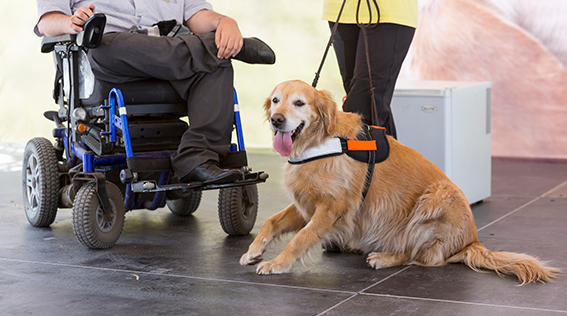 Quick Guide to Defining Service Animals